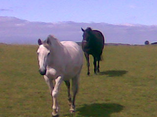 horses: willow and tassie