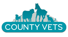 County Vets